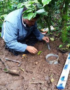 Técnico de CISA tomando los datos de la parcela de monitoreo de CISA-ASA. Foto cortesía de CISA