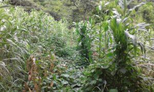 La experiencia de las ECA en Nicaragua3